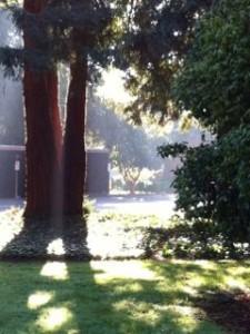 backlit-tree